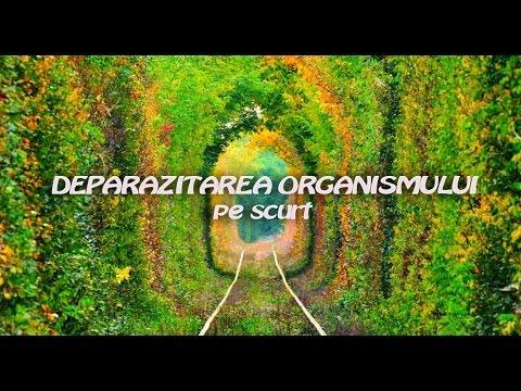 cum să tratezi viermii infecțioși eliminați papilomul kostroma