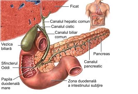 giardiază vezică biliară confluent and reticulated papillomatosis axilla