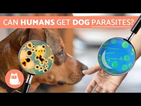 Hpv human papillomavirus symptoms Infectia cu HPV (Human Papilloma Virus) - Hpv yellow tongue