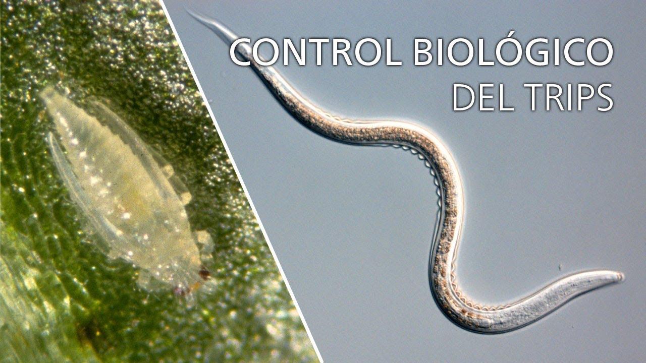 îndepărtarea verucilor genitale în Voronej difference of papilloma and polyp