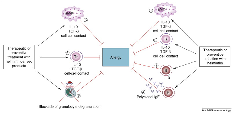 helminth and allergic disease tratament oxiuri doza unica