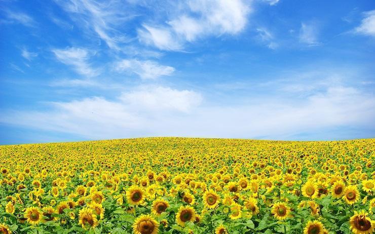 tratamentul floarea soarelui pentru viermi recenzii supliment detox