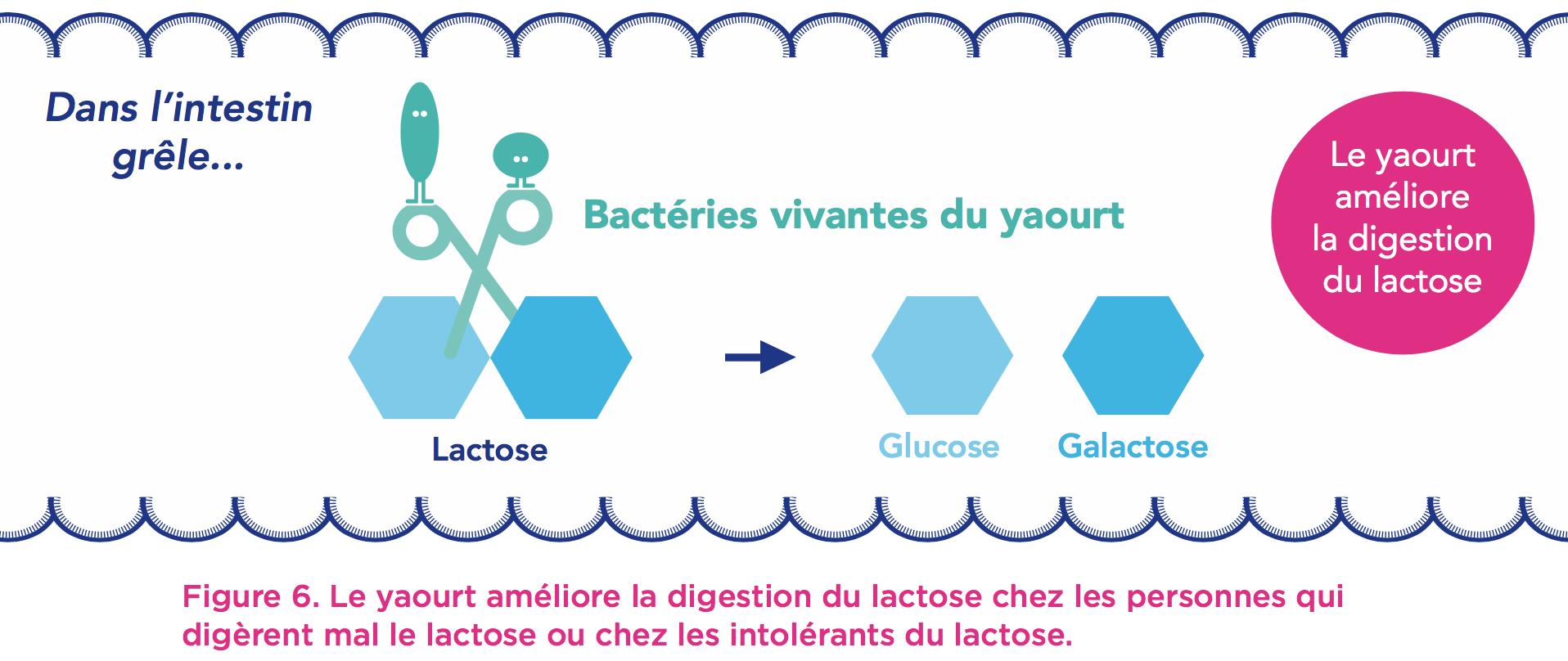 bacterie yaourt