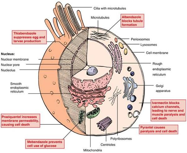 Negii scad medicament care dizolvă viermele