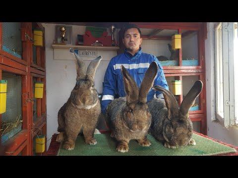 viermi în tratamentul iepurilor