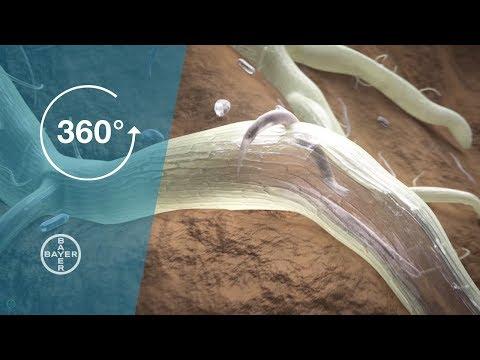 Giardia lamblia ADN - Detalii analiza | Bioclinica
