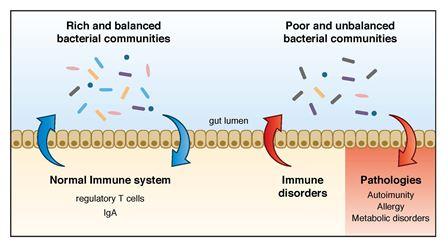 detoxifiant herbagetica contrarre papillomavirus con vaccino