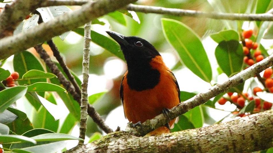 Genomul ornitorincului, o radiografie a evoluționismului