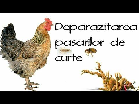 paraziți în păsări de apă recomandări medicamentoase pentru tratamentul paraziților