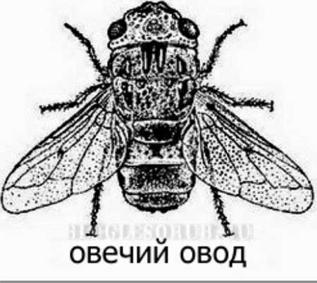cancer de colon gpc 2020 viermi pentru alăptare