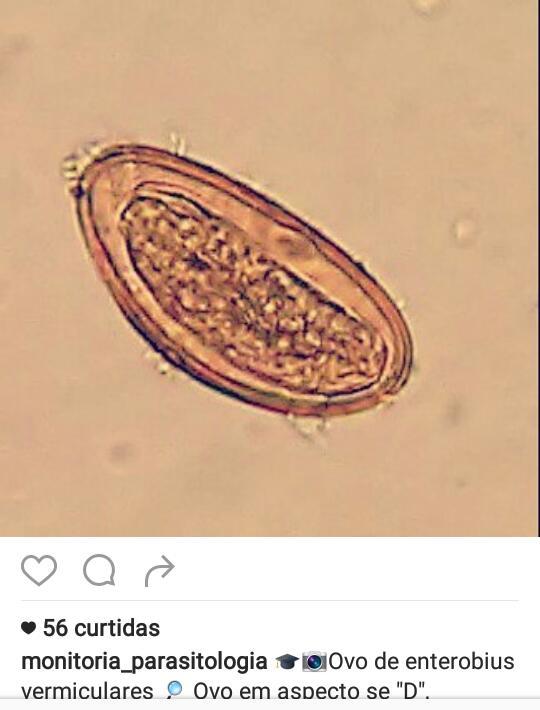 enterobius vermicularis ovo condiloame în engleză