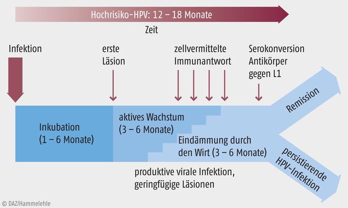 hpv impfung zeit