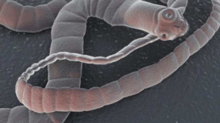 ce sunt viermii din materiile fecale umane?