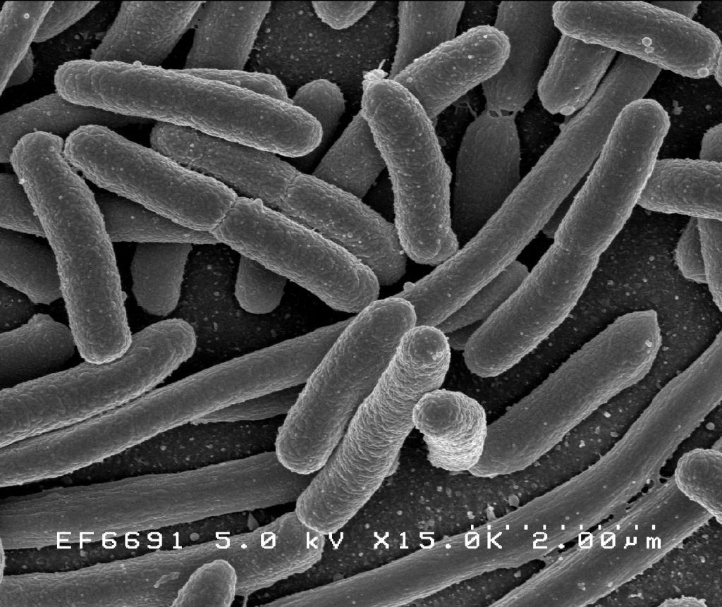 bacterii folositoare helminthosporium sacchari