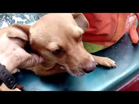 Como eliminar oxiuros en perros, Terapia Hulda csrb.ro - PDF Free Download
