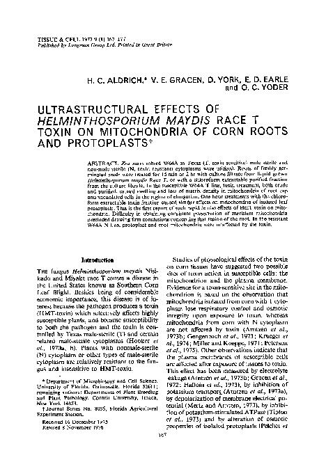 control de helminthosporium maydis