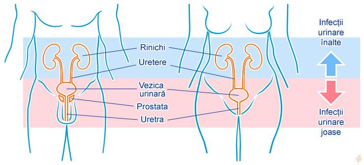 tratamentul simptomelor infecției helmintice vaselina derivata din viermi