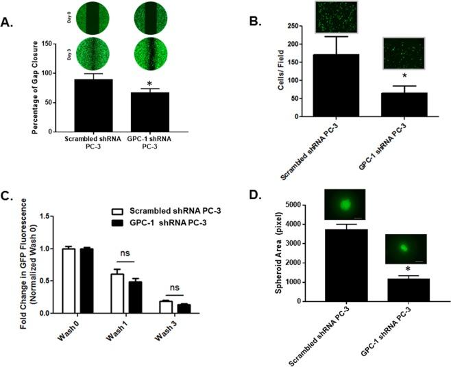 ROB1 - Metoda pentru tratarea unei tulburari legata de celulele b - Google Patents