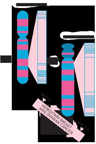 Teste genetice | Bioclinica