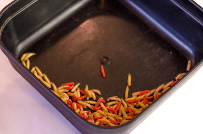 Totul despre cultura usturoiului - de la înființare la recoltare
