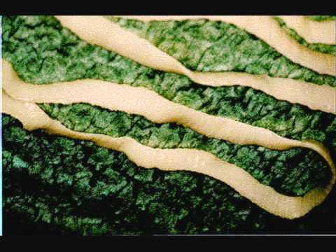 ce viermi medicinali trebuie să fie administrați mâncărime de giardioză în anus