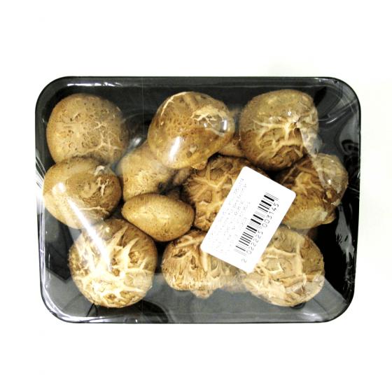 Regina ciupercilor: shiitake | Ghidul culegatorului de trufe