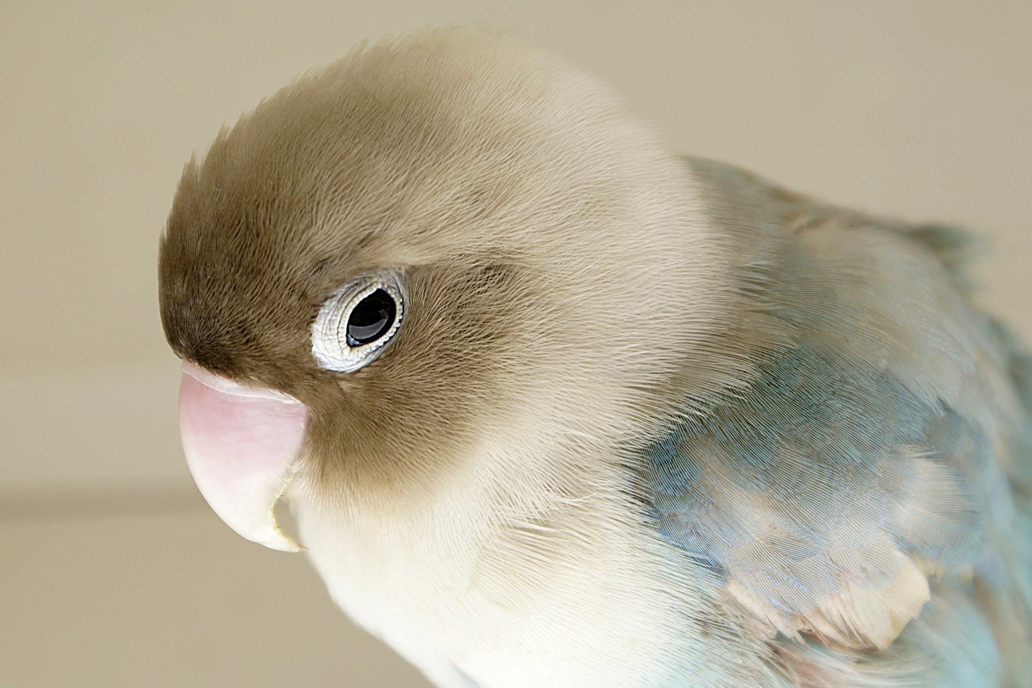 bird with papillomavirus metastatic cancer neck lump