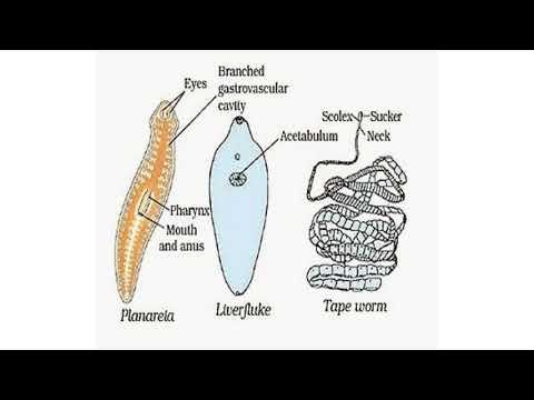 paraziți de corn herpes zoster papiloma