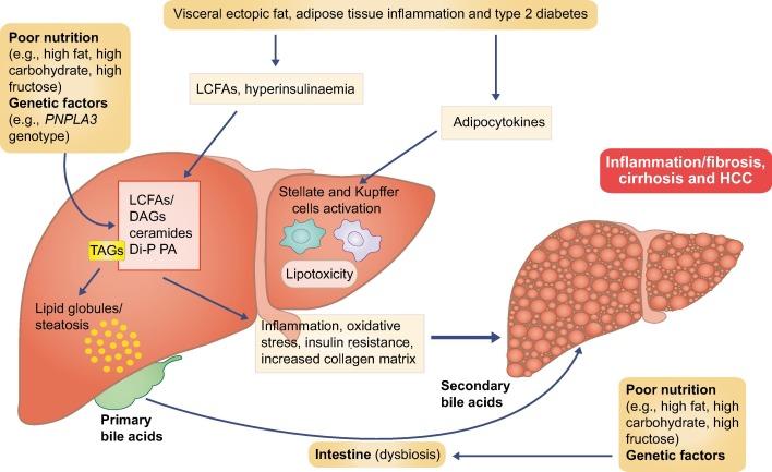 Examinarea tractului gastro-intestinal