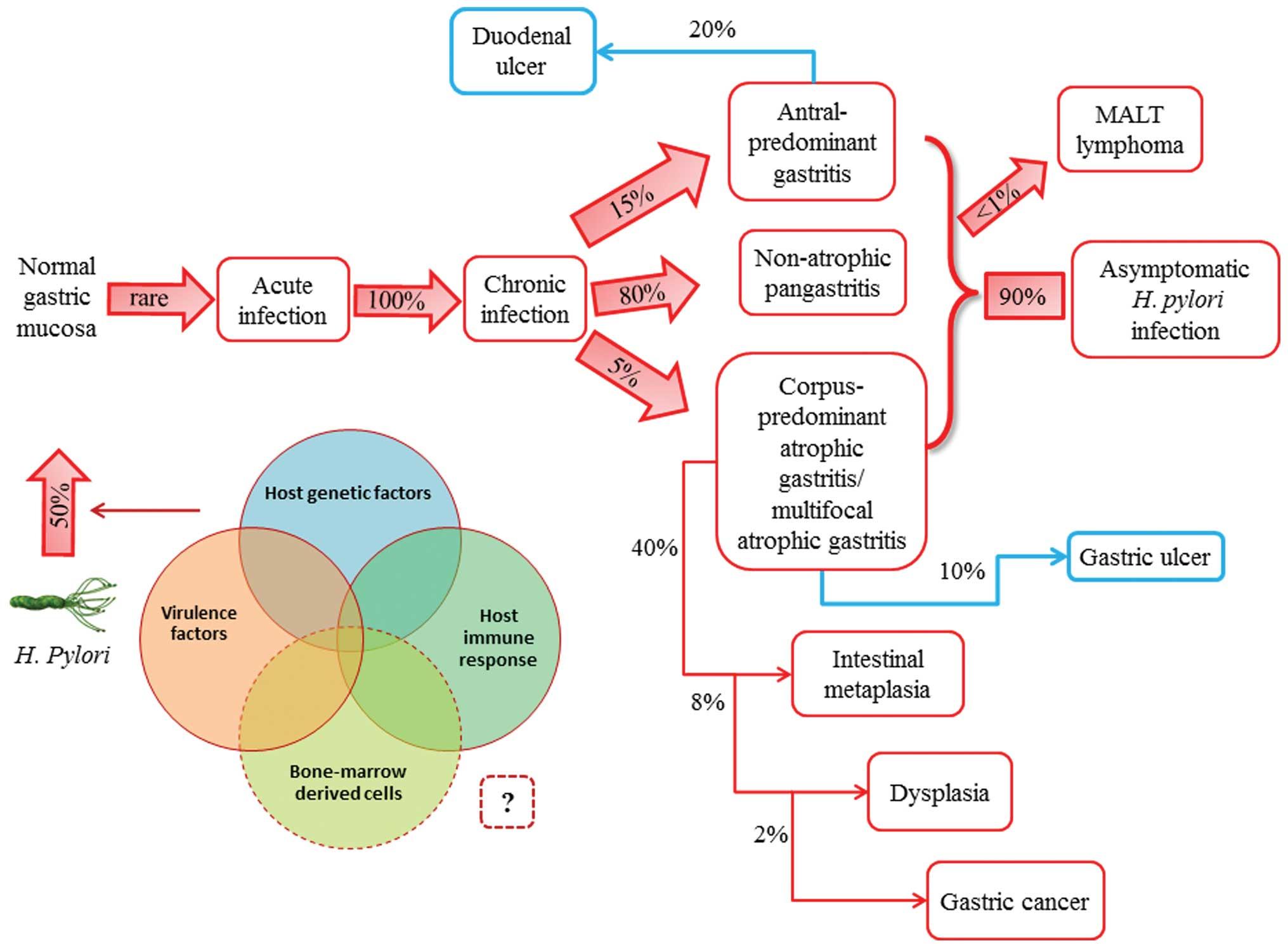 Rolul gastroscopiei in diagnosticul cancerului gastric   Blue Life