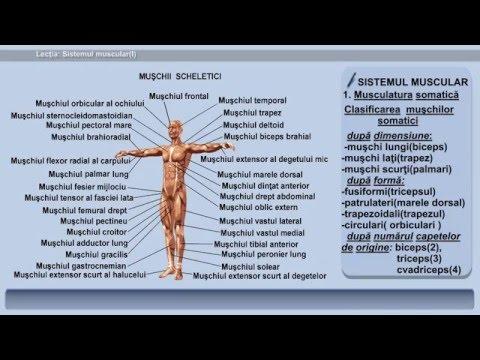 Helmintox pieredze - Simptomele helmintelor și tratamentul adulților