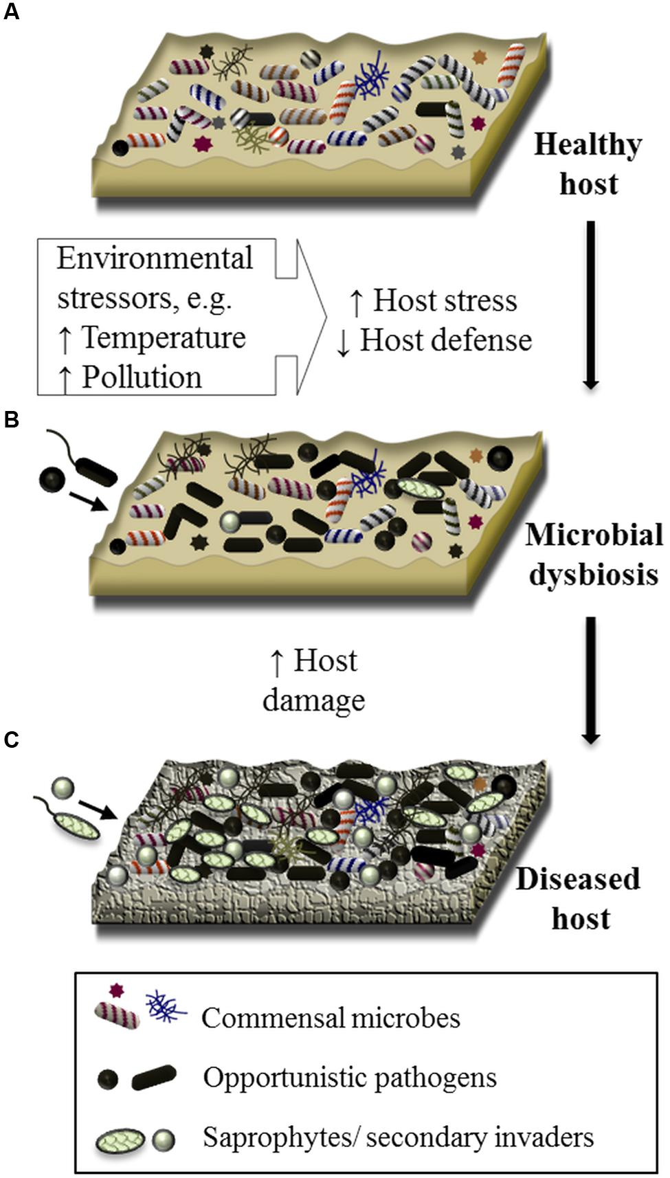 A NEW REALITY: GUT MICROBIOTA AND INFLAMMATORY SYSTEMIC DISEASES