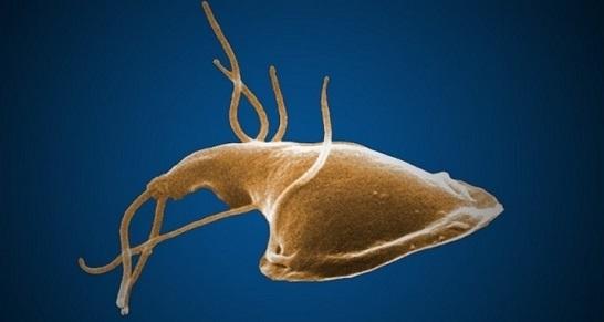 constipație de infecție helmintică viermisorii la copii de 2 ani