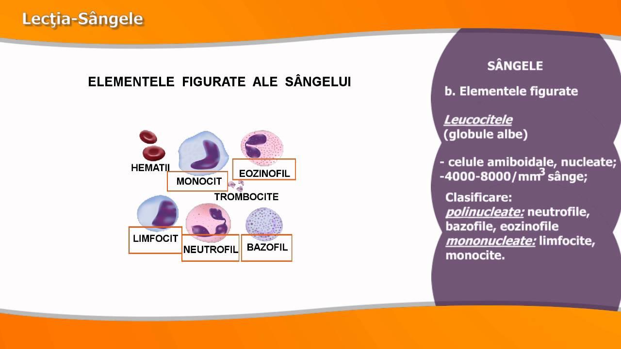 metode moderne de tratare a viermilor schema de tratament cu paraziti
