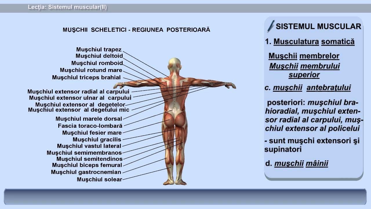 Viermi si paraziți intestinali - tipuri, simptome, tratament - BeHealthy