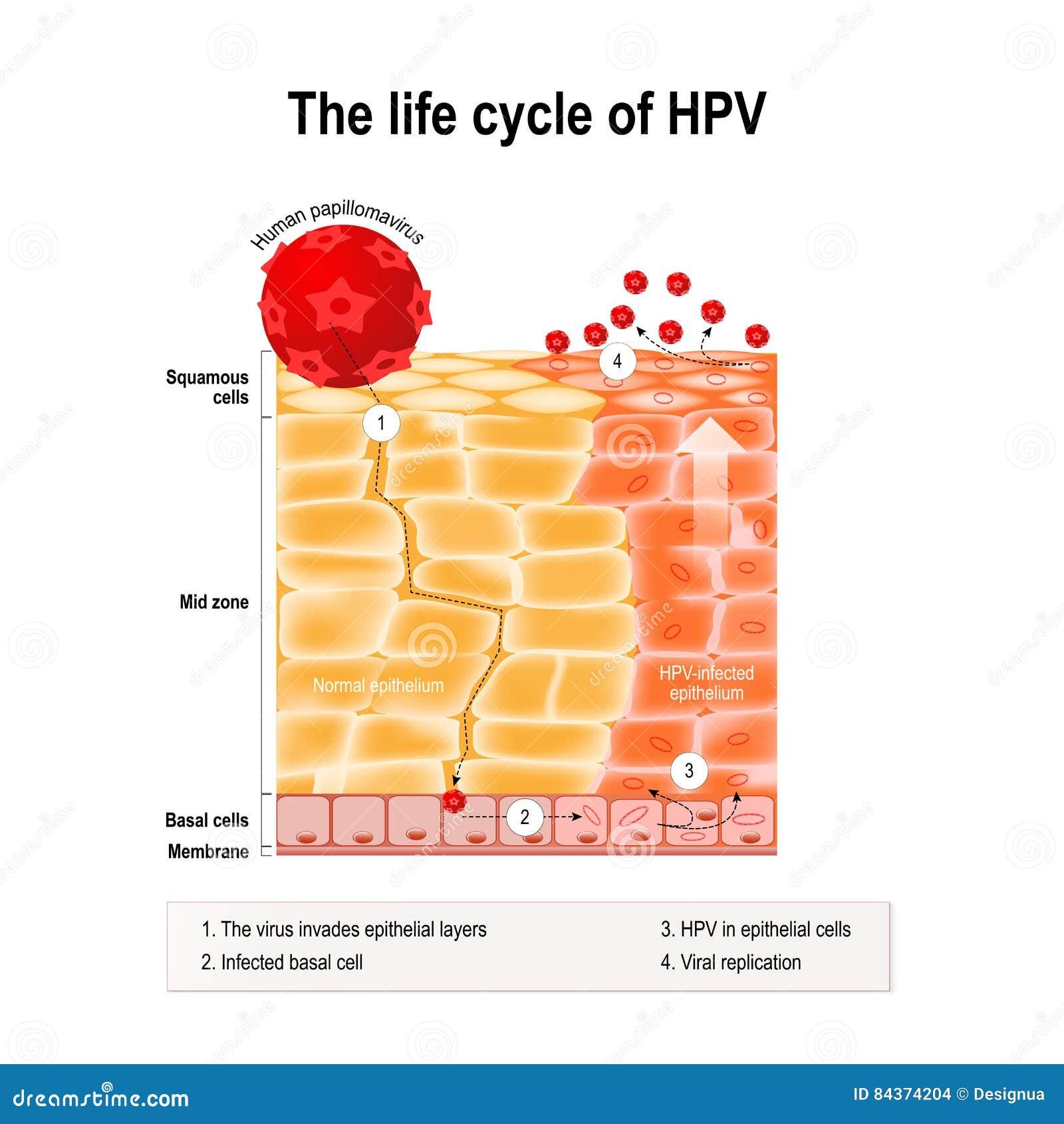 hpv virus cancer i halsen