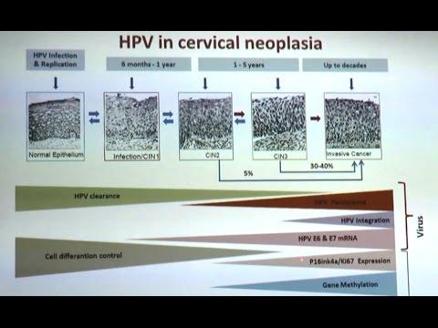 hpv virus in italiano