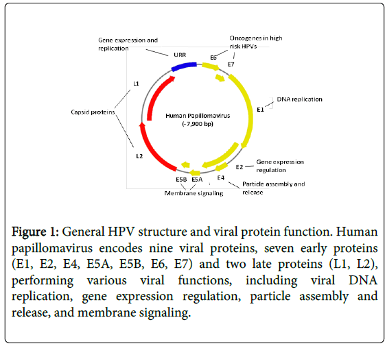 human papillomavirus and squamous cell cancer