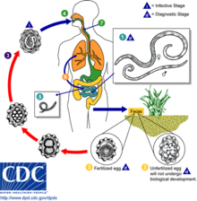 Hpv virus treatment options. Como o hpv causa cancer de colo de utero, Hpv virus and treatment