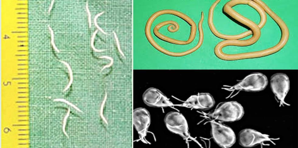 parasitos oxiuros