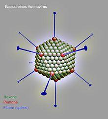 paraziți ne patogeni suplimente de detoxifiere hepatică și renală