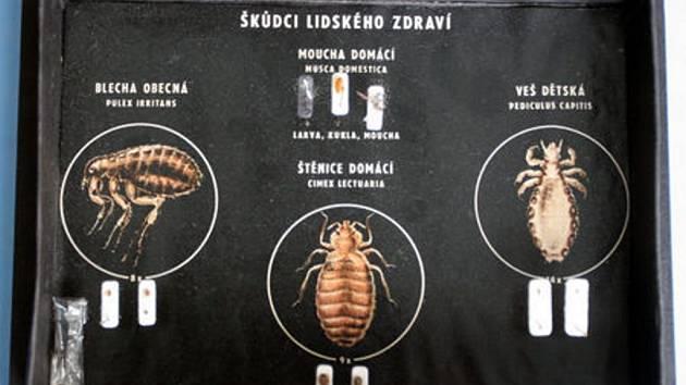 Cerny parazit ve vlasech, Medicamente antiparazitare pentru acnee