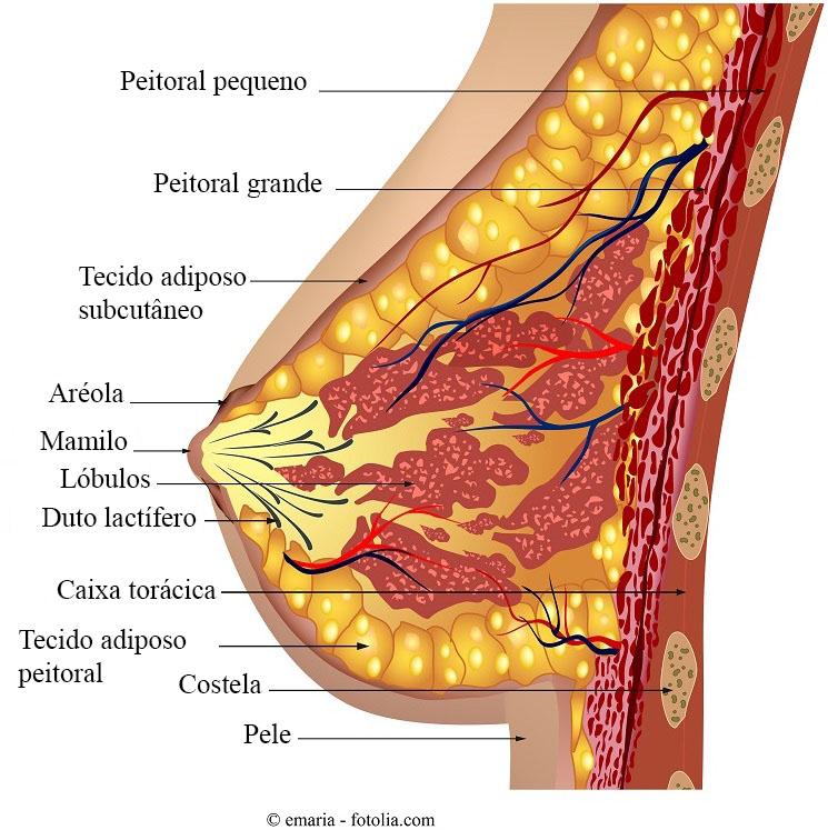 Que son los papilomas en los senos, FIBROADENOMA MAMARIO. EXTRACCIÓN helmintox 250 mg tabletes