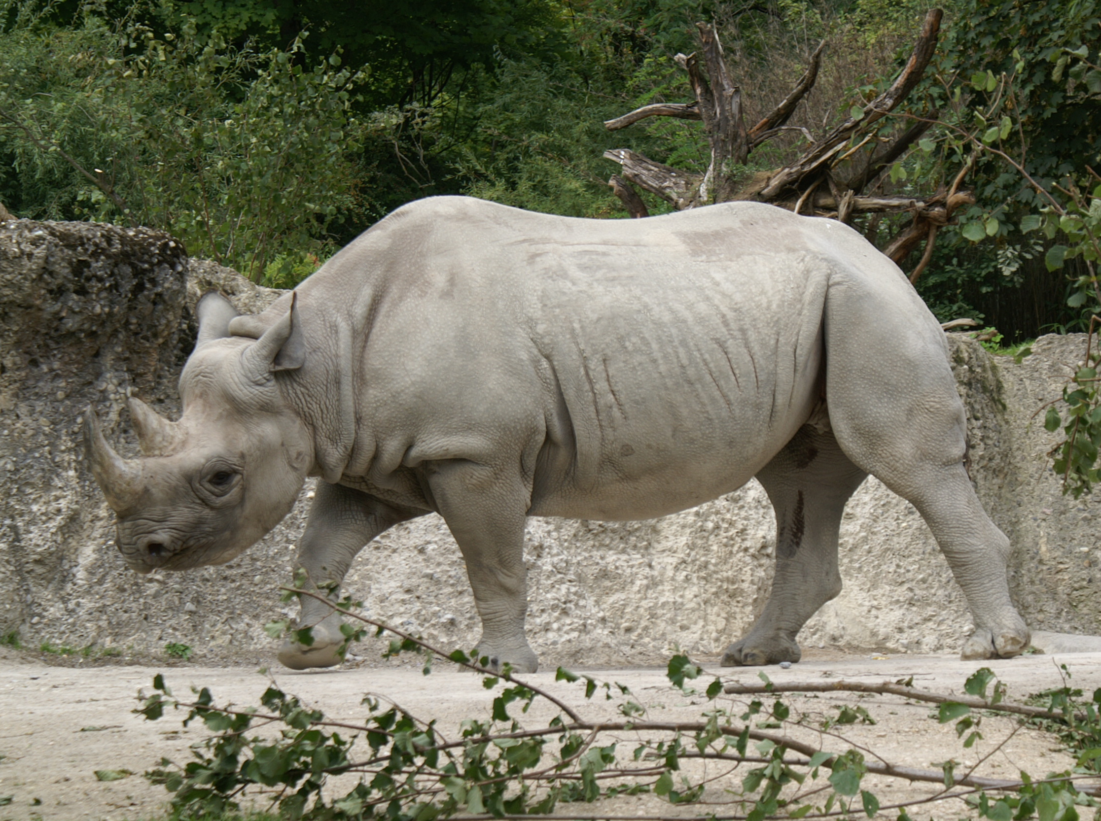 Rinocer Vtech Toot Toot