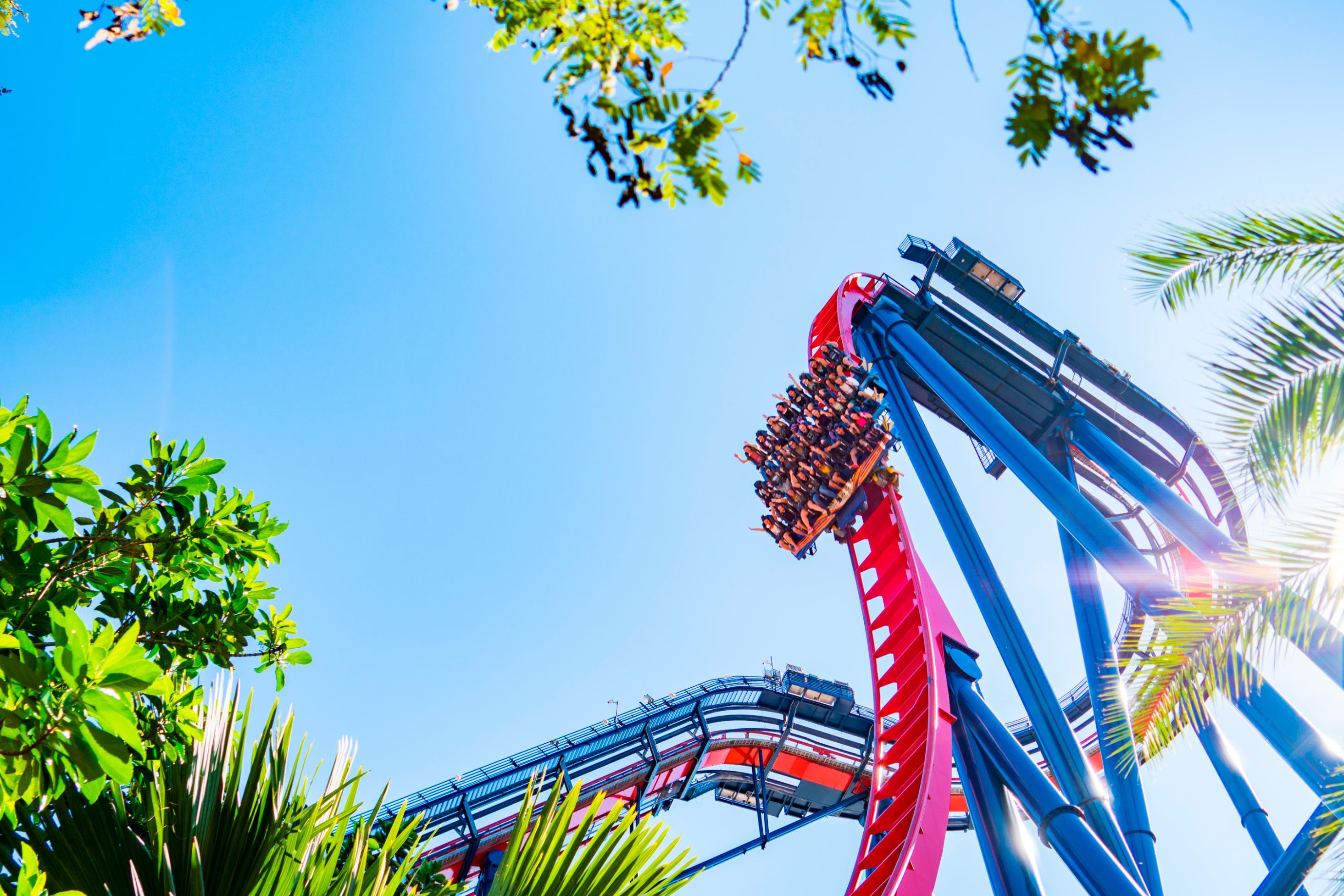 Roller Coaster zipline, Distracții de vară - Bukovel. Stațiune de schi și spa în Carpați