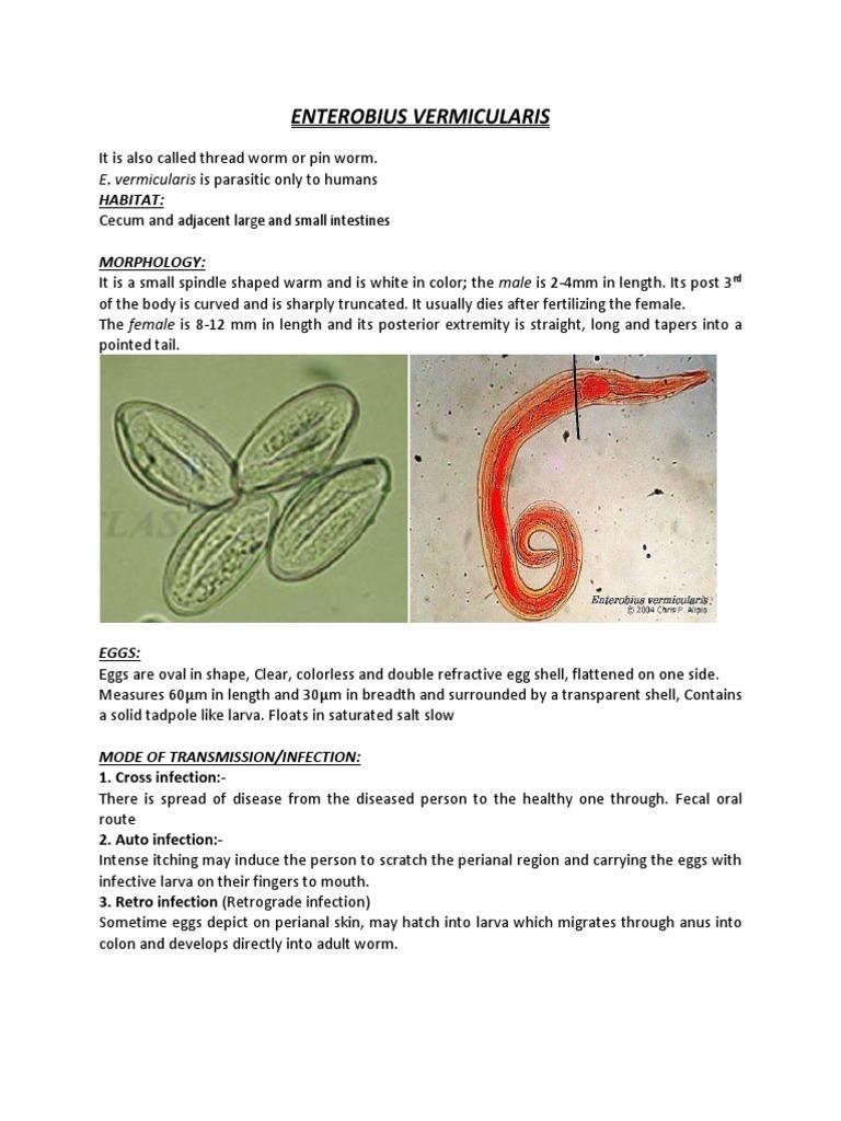 de la viermi papiloma