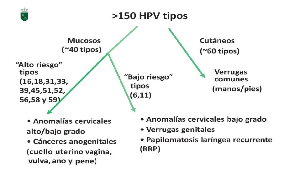 virus papiloma de bajo riesgo