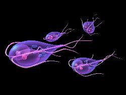 virusul giardiozei sau bacteriile